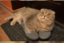 Here Kitty Kitty Kitty!