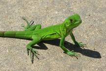Reptiles / by Nadya Warthen-Gibson