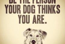 Pet Qoutes / Famous peoples qoutes about pets