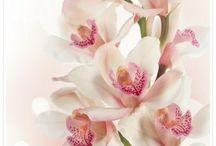 Farbkombis SU Orchideen