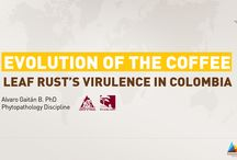 Lecture Series: Evolution of the coffee leaf rust's virulence in Colombia  / The Dr. Álvaro Gaitán specialized in Phytopathology Discipline taught us about the evolution of the coffee leaf rust's disease in Colombia and here are some highlights.