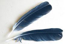 The Birdkeeper