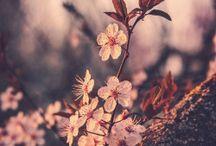Flora / Flora