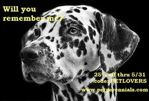 Pet Perennials Special Offers / Discount Codes - Pet Perennials products