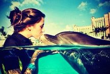 IWTTT - Swimming With Dolphins Cancun Mexico / I promote for Sandos Resorts Vacation Club which offers a 5 night all inclusive stay for attending their timeshare promotion!  http://IWantToTravelTo.com