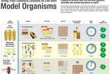 Infographics / We've compiled all of our infographics in one spot!