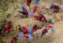 pappagalli / fotografie pappagalli