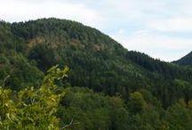 Odkryj- Parki, rezerwaty, ogrody - Wałbrzych / Parki miejskie i krajobrazowe w Wałbrzychu i regionie wałbrzyskim.