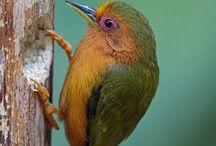 Fave birds
