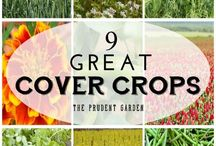 Cover Crops / Cover crops help preserve your topsoil and save your garden for the next season. Learn how to use them in your garden.