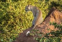 Kruger Park Visit
