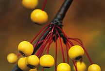 Plants with Showy Berries
