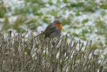 Vögel im Garten / Vögel in unseren Gärten, Vogelschutz, Nistkästen