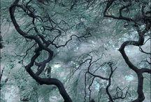 Breathtaking....  / by Victoriya Lemke