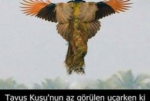 GÜZEL