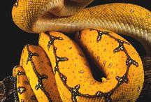 Snakes/Reptiles❤