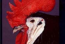 Poule ou coq ?