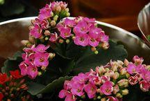 Indoor Plants - Practical Tips