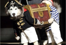 hunde Kostüm