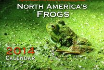 Calendars - Environmental / Frogs Are Green's co-founder Susan Newman collaborates with artists and photographers to create calendars. Now showing and for sale, 2014 Calendars. #calendars