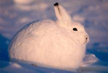Arctic animals / Billie Bowbrick, class 7J