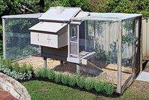 Chicken Coops & Animal Housing / by Trish Jeffers-Zeh