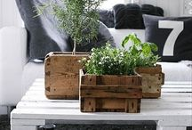 Pallet Ideas / by Cindy Johnson