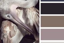 Colour Schemes - Interior
