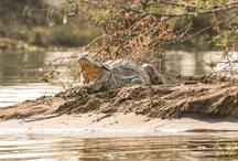 Mvuu Wildlife