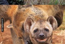 Adorable smiling animals