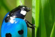 可愛い、変わった昆虫