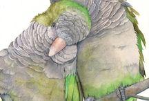 TEKENEN - VOGELS - 2 Kuffel papegaaien