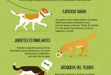 tips para tu perrito
