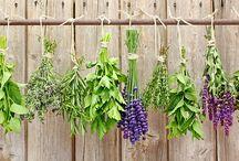 Garten, Pflanzen, Blumen