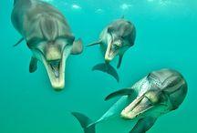 WildQuest 2015 / Our 2015 dolphin retreats schedule.