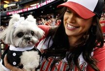 Cutest Puppies In Baseball / To celebrate our super sale on Dog Gear, we've put together a collection of Cutest Puppies in Baseball. These are the most adorable sports fans you ever did see -- celebrating every team in the MLB.