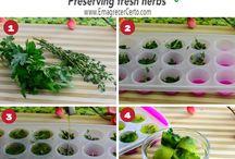 como conservar ervas frescas