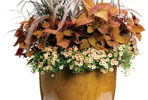 Container Gardens / by Christine Guernsey