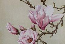Imagens flores