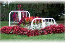 Gardening / by Sue Varisco