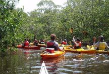 SW Florida Tours / A perfect way to kick-off your SW Florida vacation is to get a broad overview of the area and all its intriguing points of interest, whether you choose a guided or self-guided tour you're sure to create memories to last a lifetime. / by Must Do Visitor Guides
