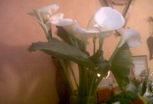 Mes réalisations / Bouquet de roses