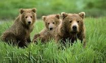 Animals I love!