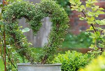 Gardening / It is a good idea to decorate your house