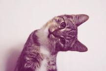 animalssss / by Tia Burkett