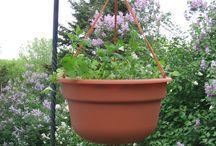 Garden Ideas.... / by Becky Smith