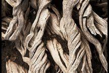 Beatiful wood