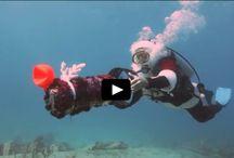 Divosea Plongeurs International / Divosea Plongeurs International