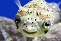 Salt water Fish / by Angie Stulken Bell
