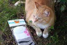 Pets & Paws / Photos of critters and their Fluff-Buddies goodies!